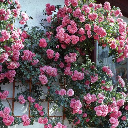 450x450_85_site218_3_20120422223106_Rozarium-yutersen.jpg